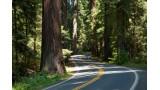 2011 Redwood Camp Meeting - Jim Pedersen (CD)